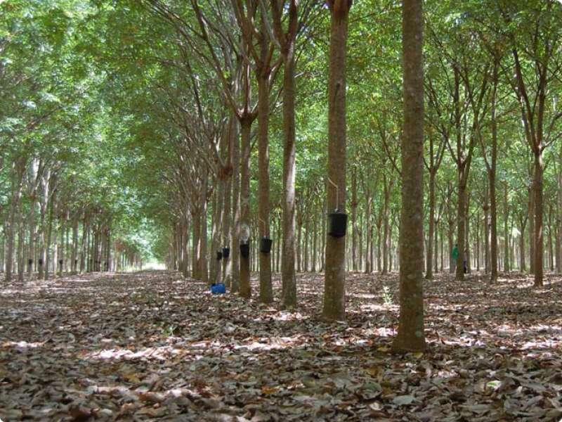 Terreno para Silvicultura 02 - São Bento do Sul / SC